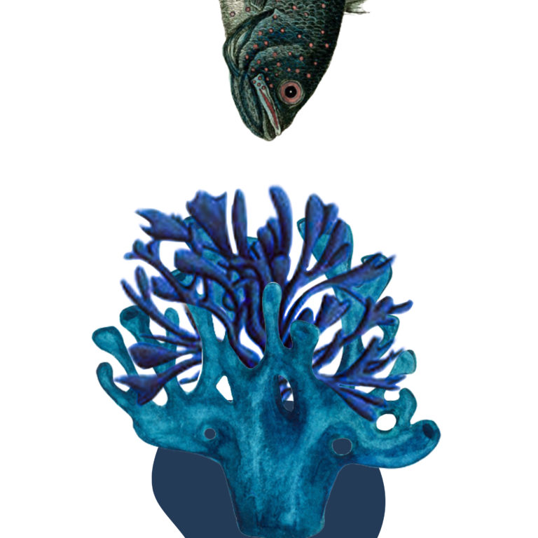 Québec Collage / Projet Bleu / Nadia Radic